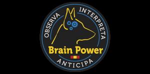 brain-png